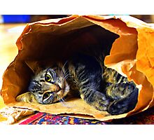 Cat in the bag, Timmy at play Photographic Print