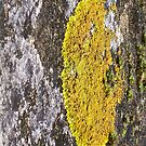 lichen by JuliaJay