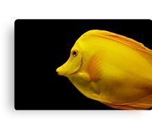 Yellow Tang Canvas Print