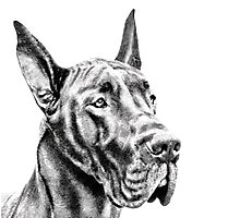 The Great Great Dane Photographic Print
