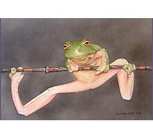 Frog 1 Photographic Print