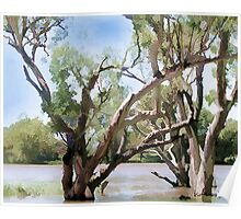 Martin's Bend, Murray River, South Australia Poster