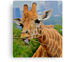 Giraffe Snacks / Refreshments ???. Metal Print