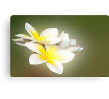 White Lady - frangapani flowers Canvas Print