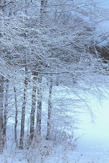 Snow covered trees by Melissa Delaney