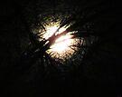 Follow the Light by Brenda Dahl