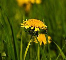 Yellow & Green by MarekM