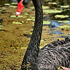 Black Swan by Paul Sparrow