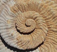 Sandstone Spiral Shell by bambem