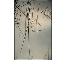 River Reeds Photographic Print