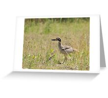 Beach-Stone Cur Greeting Card
