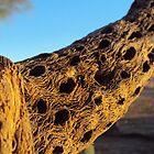 Natures Wooden Artshow by DOE13