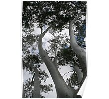 Gum Tree regional Australia Poster