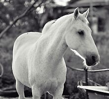 The White Horse by Melissa Drummond
