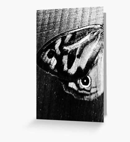Butterfly Wing in Monochrome Greeting Card