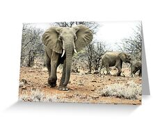 """""""The Matriarch"""" - african elephant cow (Loxondonta africana) Greeting Card"""
