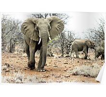"""The Matriarch"" - african elephant cow (Loxondonta africana) Poster"