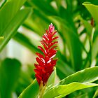 Tropical Red by Lennox George