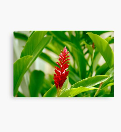 Tropical Red Canvas Print