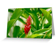 Tropical Red Greeting Card