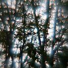 Light Echoes by Daniela Weil
