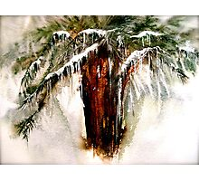 Concerto....A Winter Poem... Photographic Print