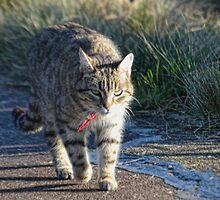 Top Cat by lynn carter