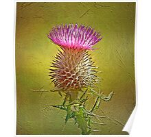 Spear thistle on gold Poster