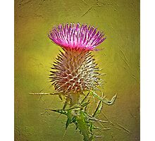Spear thistle on gold Photographic Print