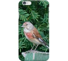 An uncommon Common Linnet iPhone Case/Skin