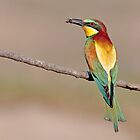Birds of South Africa by Lamprecht