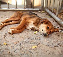 Let Sleeping Dogs Lie by ieatstars