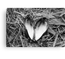 Loveheart Mussel. Canvas Print