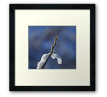 Frosted Tree Bud Framed Print