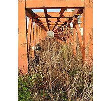 rusty cobweb  Photographic Print