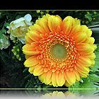 Orange Gerbera Daisy by MidnightMelody