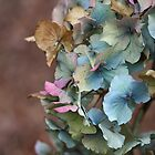 Rainbow Hydrangea by Astrid Ewing Photography