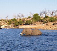 Swimming the Chobe River by Matt Eagles