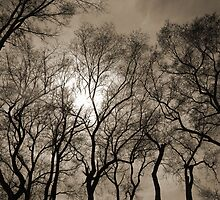 Sun Through Trees by tom j deters