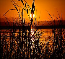Glowing Hot. by Julie  White