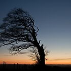 Lone tree on Raddon Top by peteton