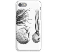 Vintage Natural History Mollusca Illustration iPhone Case/Skin