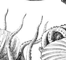 Vintage Natural History Mollusca Illustration Sticker