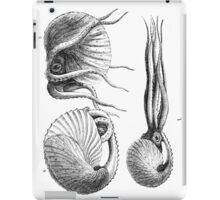 Vintage Natural History Mollusca Illustration iPad Case/Skin