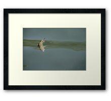 Archer Fish Framed Print