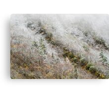 High mountain forest, covered by snowy hoar frost, Huanglong Canvas Print