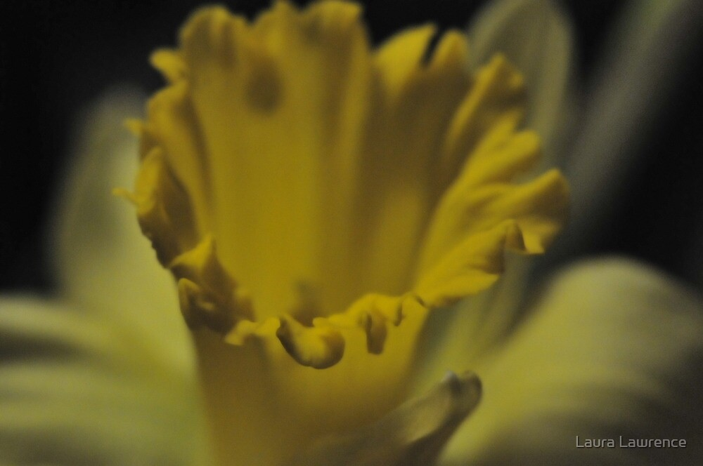 Flower 5 by LL by Laura Lawrence
