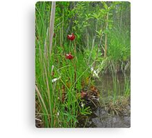 Red Water Flower Scene Metal Print