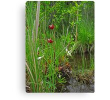 Red Water Flower Scene Canvas Print