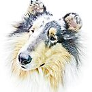Beautiful Collie by Marcia Rubin